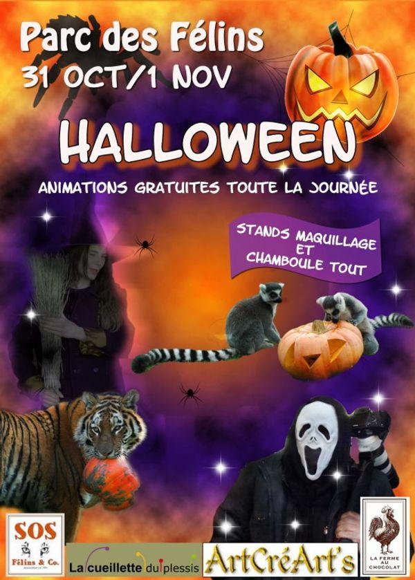 Les félins fêtent aussi Halloween