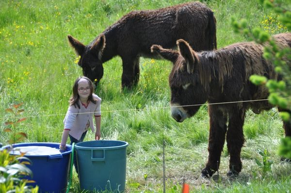 Un billet juste comme ça pour vous montrer comme ces ânes sont mignons !