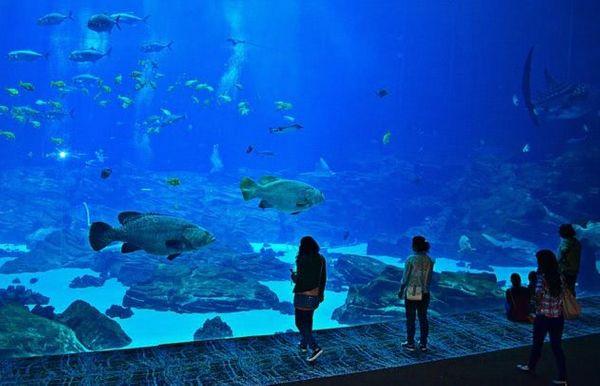 Les meilleurs spots pour découvrir la faune maritime avec les enfants.