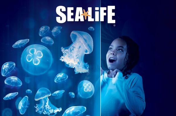 Venez visiter l'aquarium Sea Life Val d'Europe !!