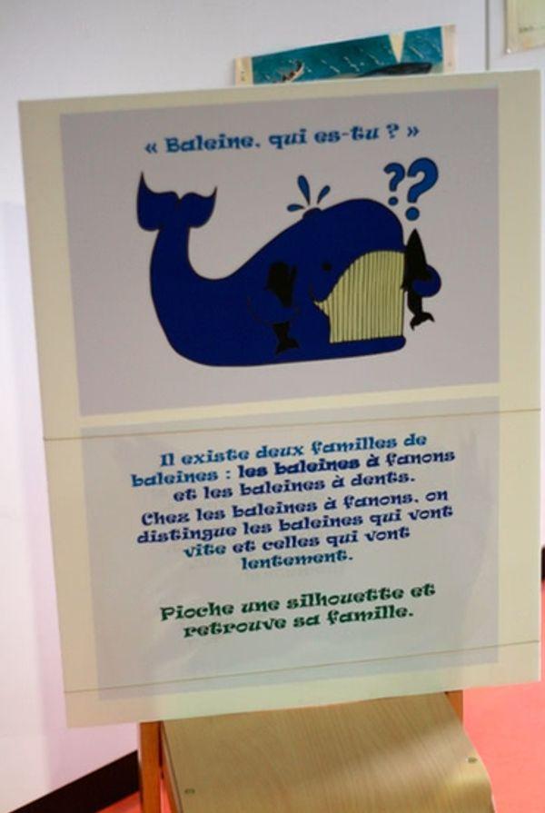 L'atelier de La Baleine pour les 3/6ans Muséum Toulouse