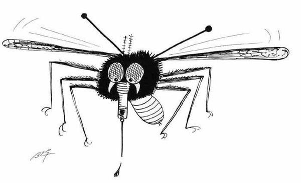 Les moustiques yen a marre !!!!!!