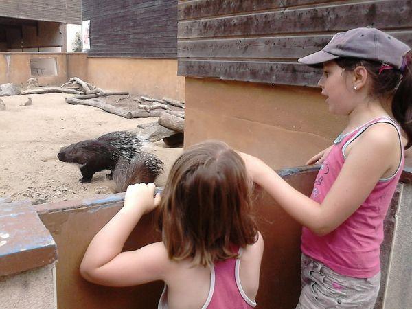 Notre visite a Natur'Zoo Mervent