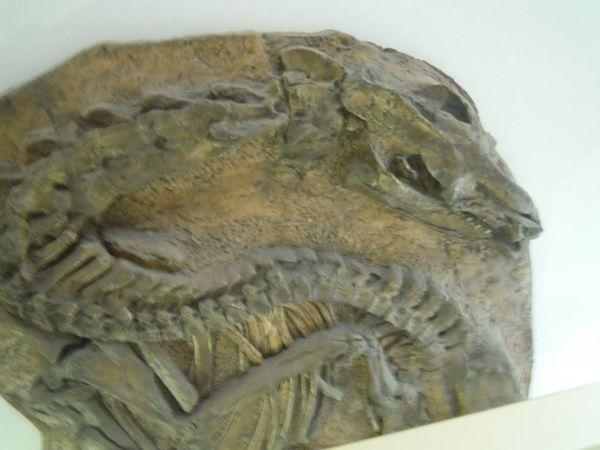 visite chez les dinosaures au Muséum