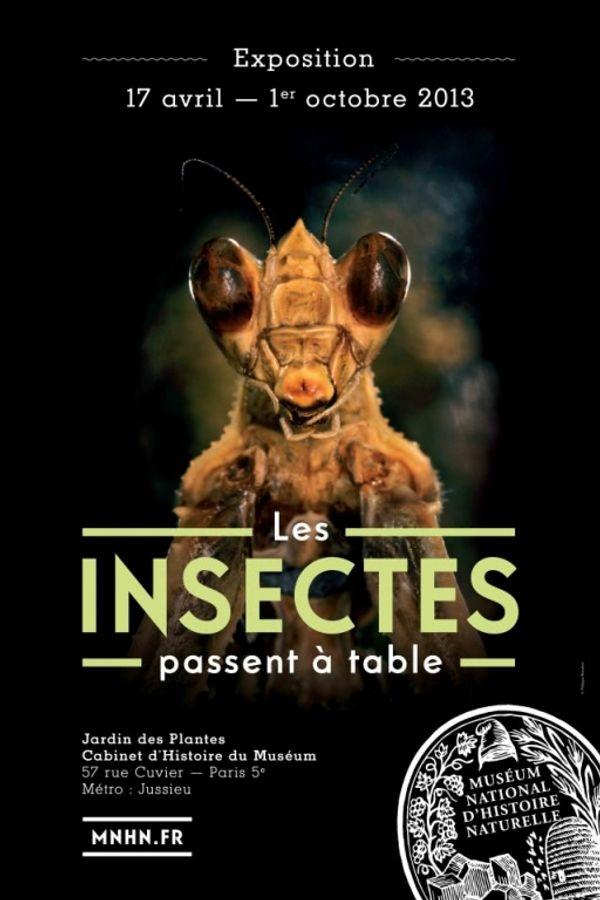 La vie des insectes à la loupe
