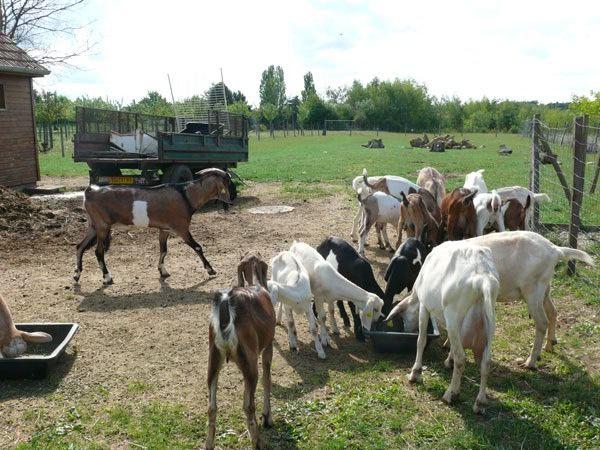 A découvrir : la ferme agricole et pédagogique de la Grange aux moines à la Ferté alais (91)