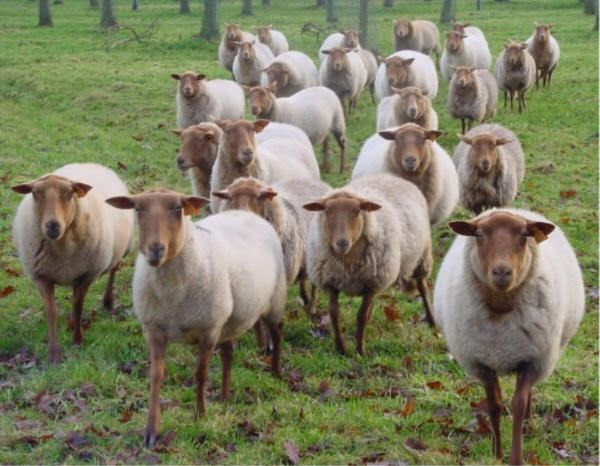 Arretez d'être des moutons