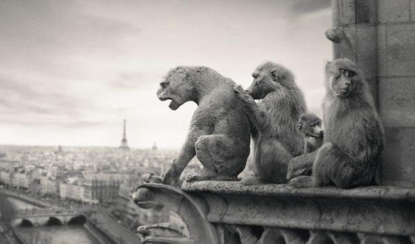 Ré Ouverture Parc Zoologique + places a gagner