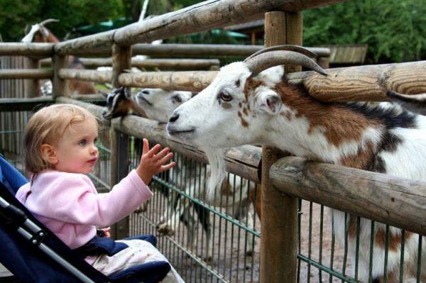 Partir en weekend dans un parc animalier