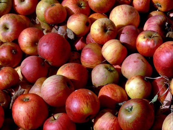 Fête de la pomme, Saint Martial de Valette 12 et 13 octobre 2013, Dordogne