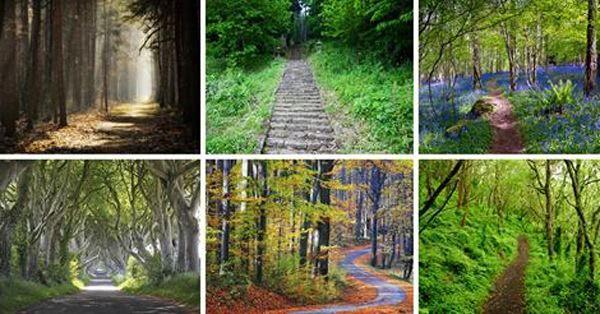On dit que le chemin qui vous attire révèle votre personnalité