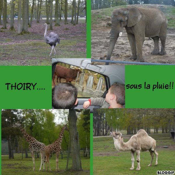 Notre visite du zoo de Thoiry.....sous la pluie :)
