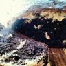 Cake marbré vanille et cacao amer