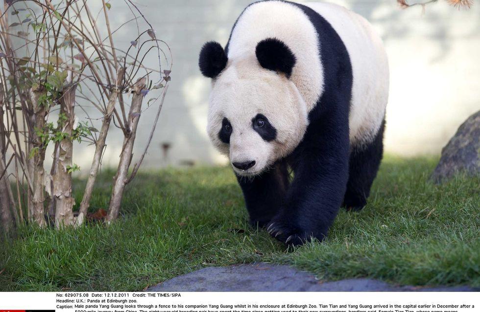 Best of 2011 : Un panda nommé femme de l'année !
