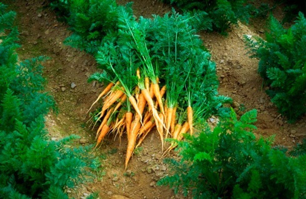 {worldnum 125 Curiosité} : Elle retrouve sa bague dans ses carottes