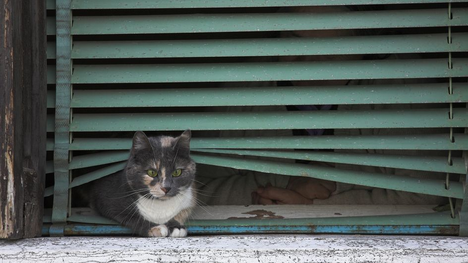 Chat : Disparitions inquiétantes à Angers