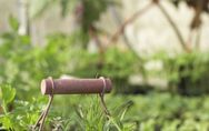 Santé : Le thym, un remède contre les boutons !