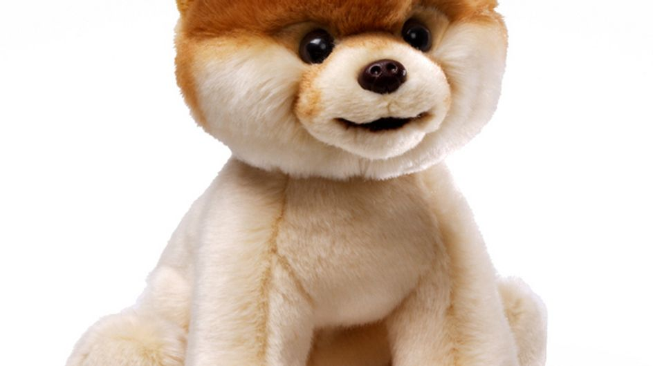 Boo : Le chien le plus mignon du monde a sa peluche !