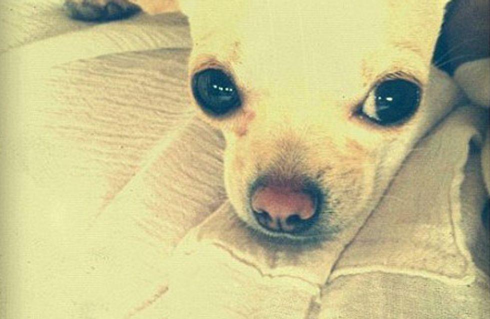 Demi Moore : Découvrez ses nouveaux chouchous (Photos)