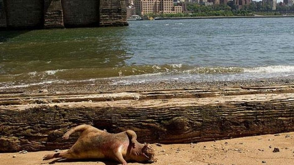 Insolite : Un mystérieux animal découvert à New-York ! (Photos)