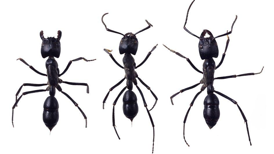 Alimentation : Des insectes bientôt dans nos assiettes