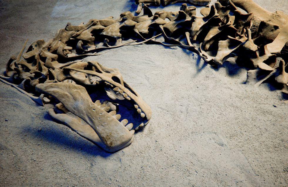 Faits divers : Un dinosaure inconnu découvert près d'Aix-en-Provence