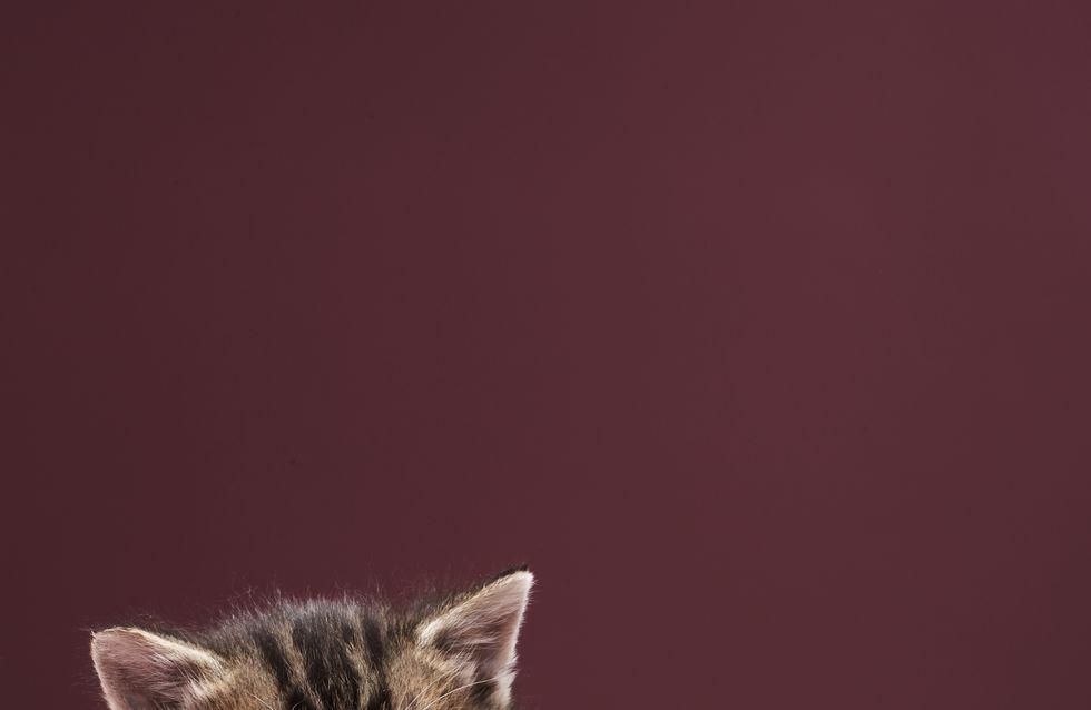 Regarder des images de chatons booste la concentration !