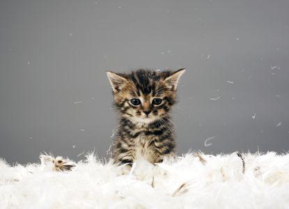 Journée mondiale des animaux : Animaux les plus mignons