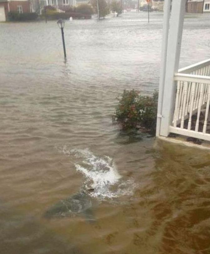 requin ouragan sandy
