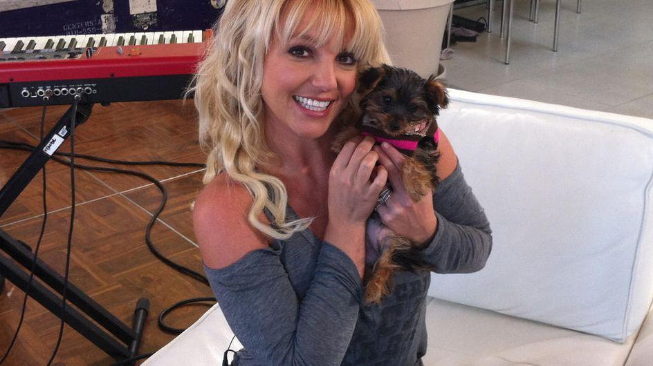 Britney Spears : Elle a adopté... (Photos)