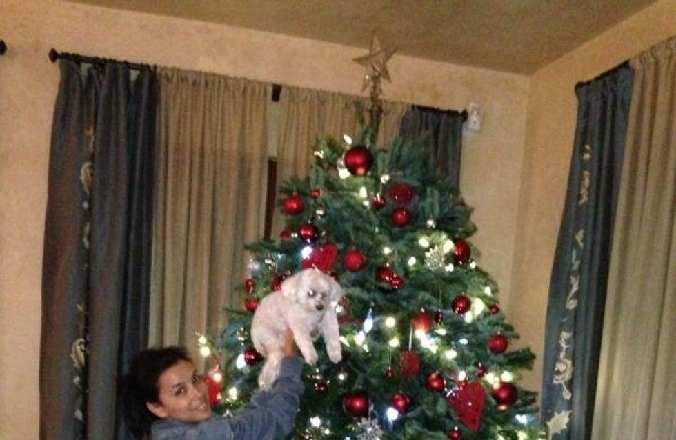 Eva Longoria : Découvrez son sapin de Noël ! (Photos)