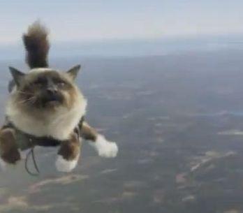 Des chats qui sautent en parachute : La Suède l'a fait ! (Vidéo)