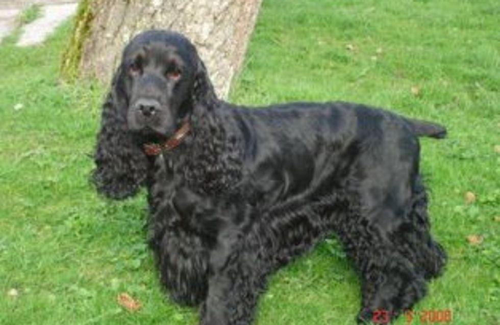 Un chien veille trois semaines son maître décédé dans la nature