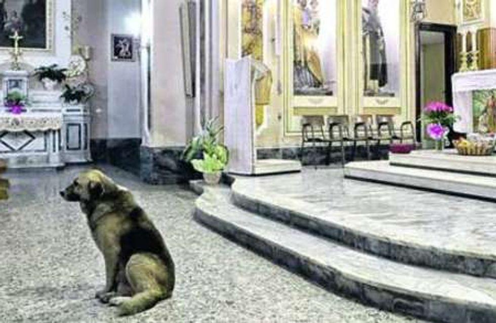 Un chien assiste à toutes les messes depuis la mort de sa maîtresse
