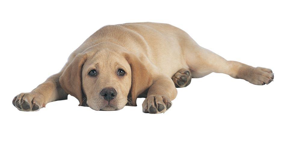 Faits divers : Un chien électrocuté sur une plaque d'égout à Paris