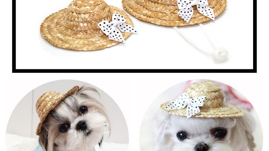Cet été offrez un chapeau de paille à votre chien