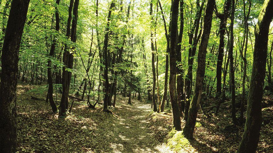 Corps retrouvés au bois de Vincennes : Que s'est-il passé ?