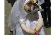 Un mariage à 200 000 dollars … pour un chien !
