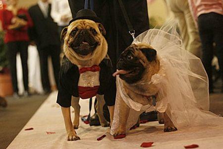 Mariage chien le plus cher du monde