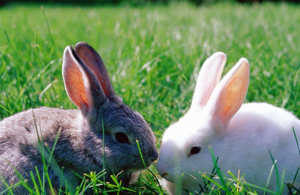 Les tests sur les animaux bientôt interdits dans l'Union Européenne