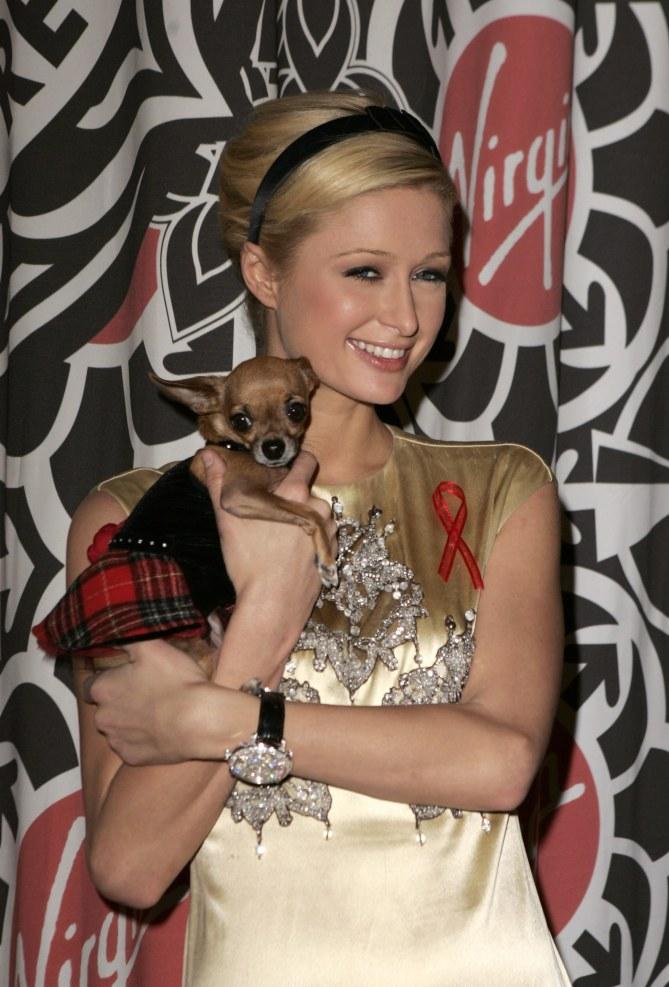 Chien Paris Hilton