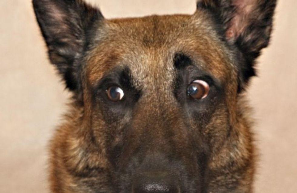 Oui, votre chien a des émotions comme nous !
