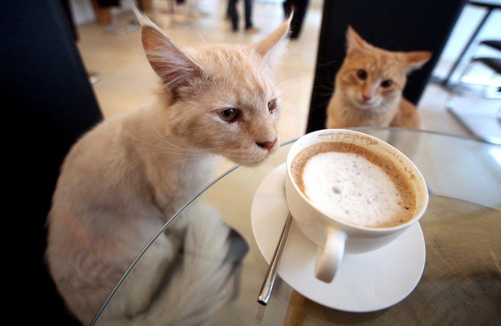 Appel aux dons pour un café à chats en France !