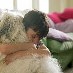 Des chiens pour réconforter les survivants des attentats de Boston