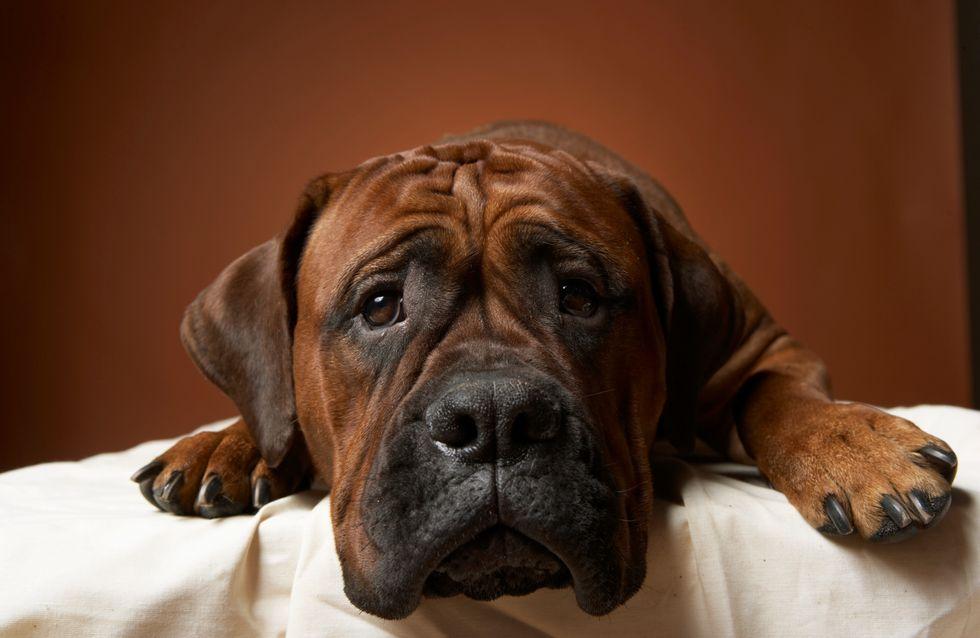 Ecologie : De la crotte de chien transformée en énergie