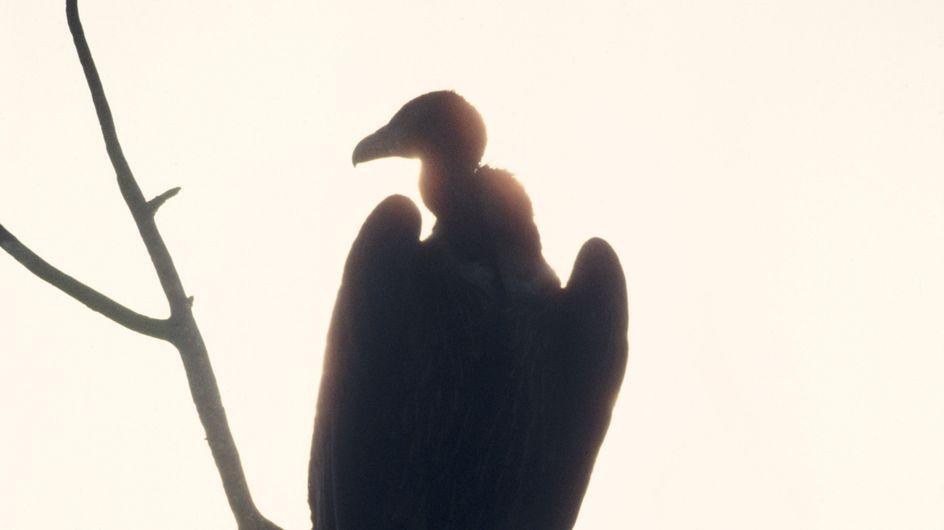 Une randonneuse dévorée par des vautours après une chute mortelle