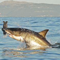 La Réunion : En lune de miel, un métropolitain est tué par un requin