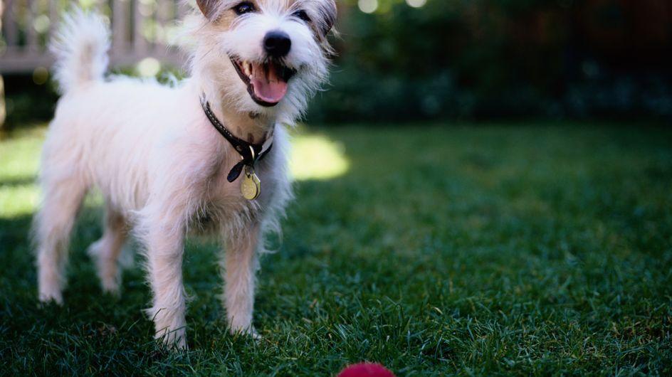 Santé : Le chien est définitivement le meilleur ami de l'homme