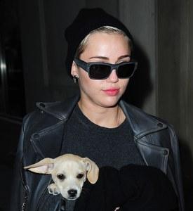 Miley Cyris et son chien