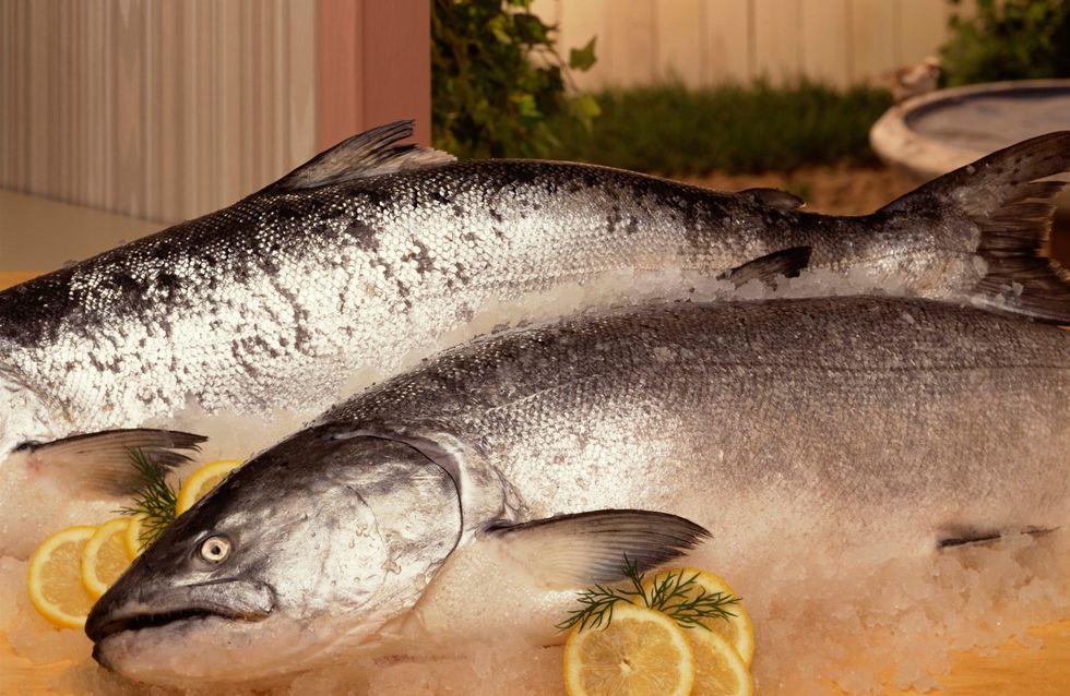 Saumon de Norvège : Le Gouvernement reconnaît sa grande dangerosité